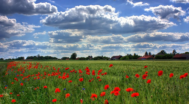 field-of-poppies-50588_640